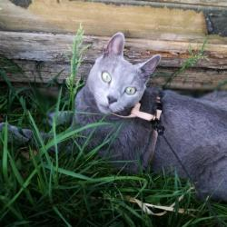 Arrêt dans l'herbe fraîche du matin, pendant la promenade dans le jardin